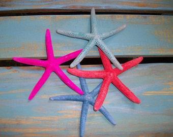 Starfish 6-7 inch dyed, real starfish