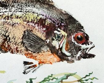 ORIGINAL Red Eye Bass GYOTAKU ( Fish Rubbing ) on Johannot Paper 9.5 X 12 Rock Bass Lake Art Fishing Fisherman Decor by Barry Singer