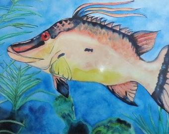 """5 x 7 Digital Print of Original Watercolor Painting: """"Hog Snapper"""""""