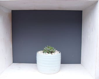 Tiny Echeveria Succulent Plant in a Small Pale Blue Handthrown Pot