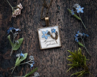 Forget-me-not Flowers necklace | biology teacher gift | Real Pressed flowers jewelry | biology jewelry | Forget me nots biology gifts idea