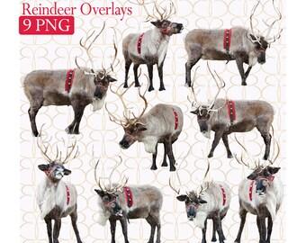 Digital Reinder Overlays {9} + Bonus Christmas Tree Farm Background!
