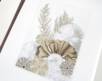 White and Tan Sea Shell Collection with Coral, Sand Dollars & Sea Urchins Fine Art Archival Print