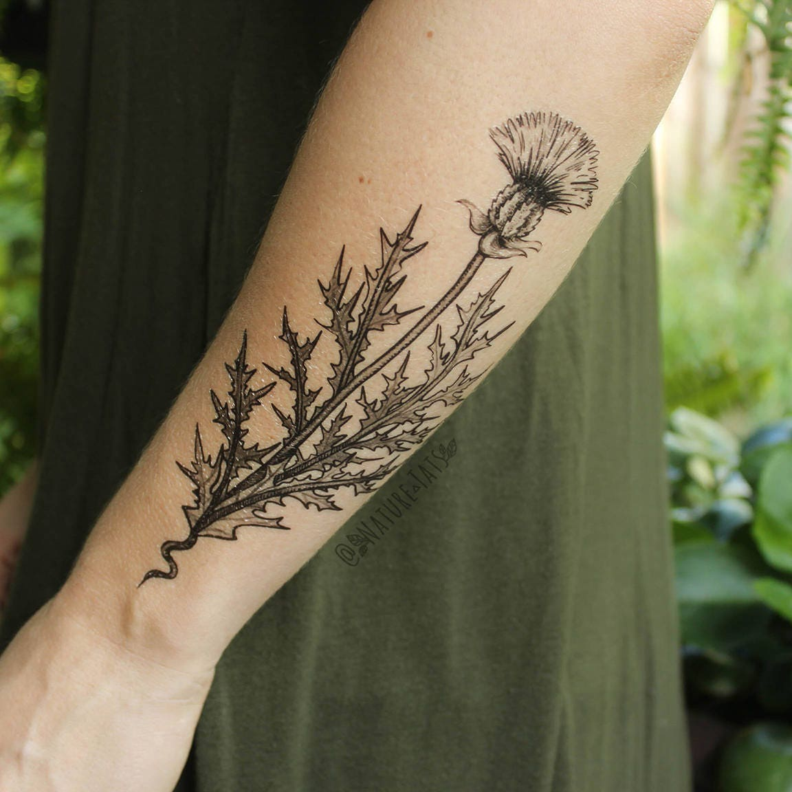 Black Line Drawing Tattoo : Purple thistle flower temporary tattoo black line drawing