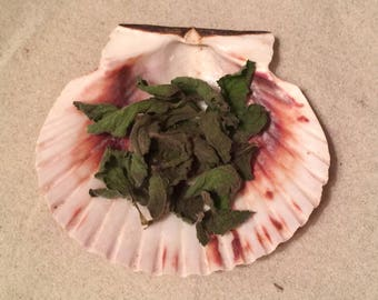 Organic Apple Mint ~ Hermit Crab Food