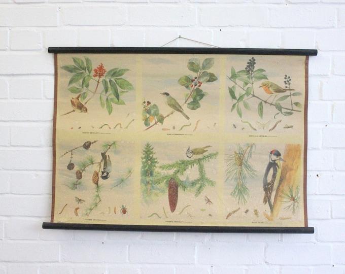 "Early 20th Century School Chart ""Birds"""