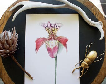 Tropical Orchid Print