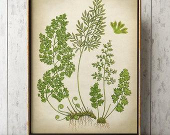 Fern Moss Poster, Fern print, Moss Print, Fern Art, Botanical Art, Botanical Print, Botanical Chart, Botanical Poster