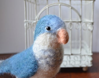 Mr. Blue Faced Quaker Parrot, needle felted bird sculpture