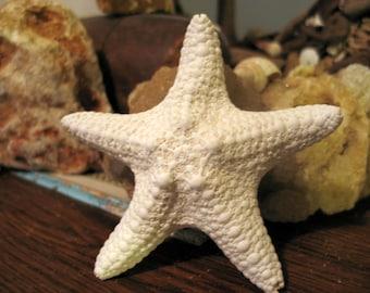 White Ivory Starfish Beach Wedding Coastal Home Decor Arts Crafts Jungle Thick Mud Stars Chunky DIY Place Settings Shadow Box Frames Mirrors