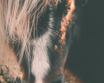 12 x 8 Download,Equine Image,Pony Image,Pony Portrait,Pony Wall Art,Pony Room Decor,Pony Fine Art,Pony Photography,Horse Fine Art,Horse Art