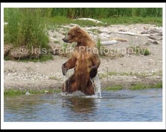 Brown Bear Cub Standing in Katmai National Park Alaska, Wildlife, Animal Print, Nature, Wall Art