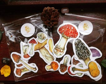 Toadstools Sticker Lucky Bag