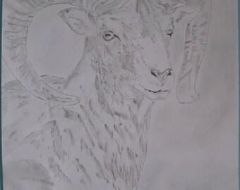 "original drawing ""ibex"" A3 pencil signed G.Vanspey"