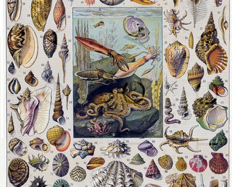 Types Of Mollusks Chart