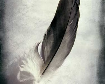 """Feather Photo, Feather Print, Nature Photography, Vintage, Feather Art, Romantic Photo, Fine Art Photography """"Feathered"""""""