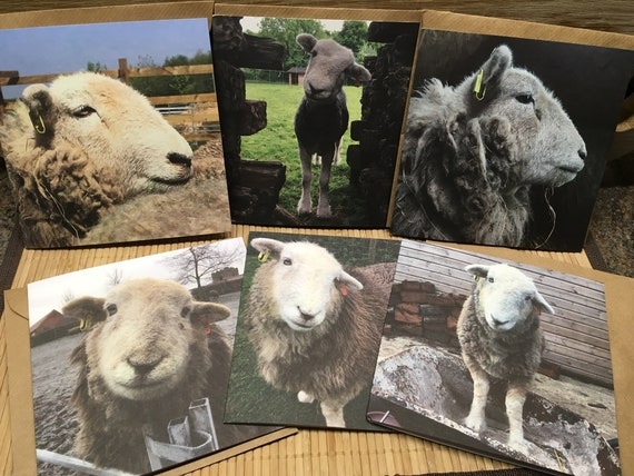 HILDA THE HERDWICK greeting card set with envelopes