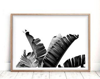 Palm Leaf Print, Palm leaf, Tropical Leaf Print, Tropical Print, Palm Leaf Art, Leaf Print, Banana Leaf, Tropical Leaves, Banana Leaf Print