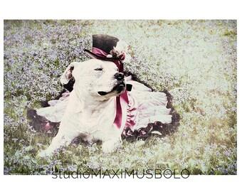 "Maximusbolo's ""3 Seasons"" 12 5x7 Postcards and Envelopes"