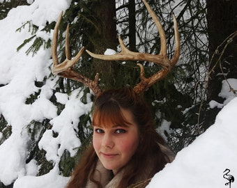Whitetail Replica Antlers
