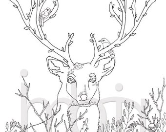 Deer colouring page, Printable Coloring Sheet, instant download pdf, Digital Stamp, spring colorings, birds, herbs, antlers, spring trees
