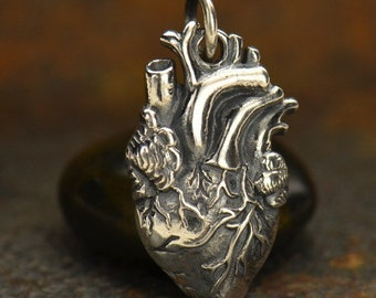 Heart - Sterling Silver Anatomical Heart - Pendant, Organ Charms, Science, Muscle, Love, Doctor, Nurses, Gifts, Anatomy, Medical Student
