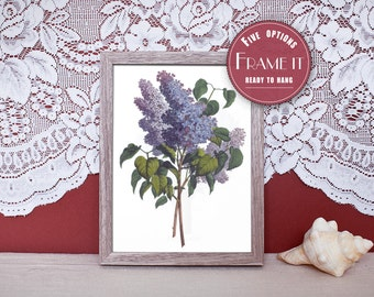 "Vintage illustration of Lilacs - framed fine art print, flower art, home decor 8""x10"" ; 11""x14"", FREE SHIPPING - 110"