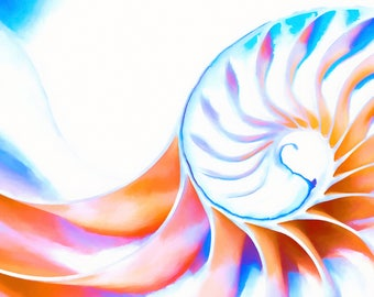 Altered Photography - Colorful Nautilus