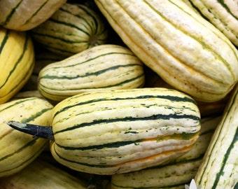 Delicata Winter Squash Heirloom Seeds - Non-GMO, Open Pollinated, Untreated