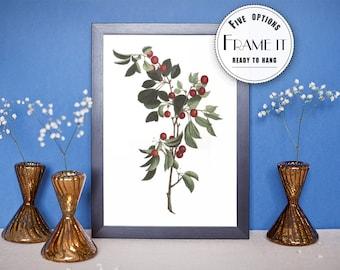 """Vintage illustration of Cherries - framed fine art print, botanical art, home decor 8""""x12"""" 58"""
