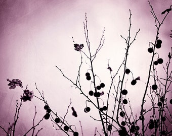 "Nature Photography - purple wall art plum black print violet branches branch pink dark modern photo, 11x14, 8x10 Photograph, ""Withered"""