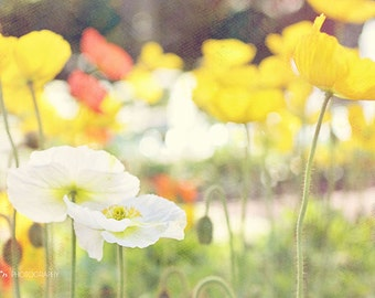 Poppy Flowers Photograph- Nature Photography, Spring Flowers Print, Yellow White Poppy Field Print, Nature Photography, Garden Wall Art