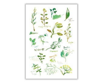 Herbs Illustration botanical watercolor, drawing herbs, cooking, culinary Art botanical print poster, Basil