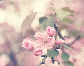 Apple Blossom Print or Canvas Art, Pink Flower Photography, Dusty Pink Wall Art Pink Bedroom Wall Art, Floral Photography Cottage Chic Decor