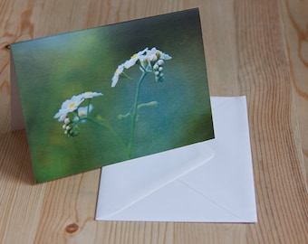 Forget-me-not greetings card (blank inside)