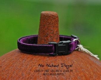 Plum Velvet ribbon cat collar, puppy collar, small dog, small breed, teacup