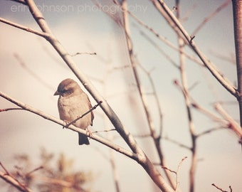 bird photography nature photograph wall art for her tree photo pink home decor gray decor Little Sparrow