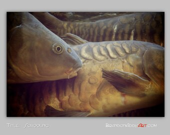 Schooling Koi Japanese Carp Art Photography Print, Koi Photo, Chocolate Brown