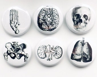 Human Body Anatomy Magnets physician assistant doctor gift skull foot graduation geek button pins kidney lungs party favor greys goth