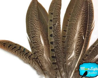 "Natural Tail Feathers, 10 Pieces - 4-6"" NATURAL Ringneck Pheasant Tail Feathers : 3865"