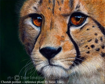 "custom portrait Cheetah scratchboard ""Intense"""