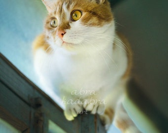 Ginger rustic cat under roof Instant Digital Download Art Photography Printable, blue home decor for cat lovers, animal photography