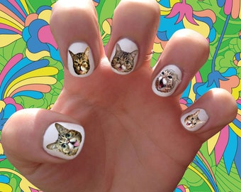Lil Bub Nail Decals Transfer Nail Stickers