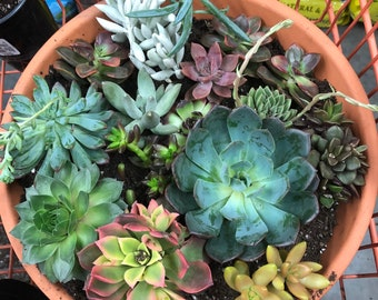 Clay Succulent Garden
