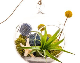 "Air Plant Terrarium with Starfish, Moss, Blue Thistle, Yellow Billy Buttons / 5"" Glass / Deep Blue Sea"