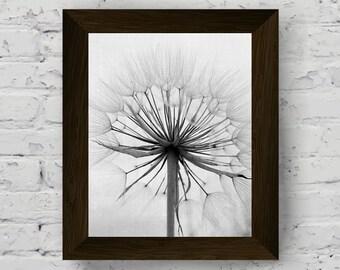 dandelion print, black and white nature wall art, flower photography, modern large poster, printable artwork, instant digital download