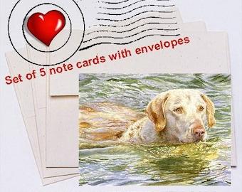 Summer Swim, Chesapeake Bay Retriever Note Card Set
