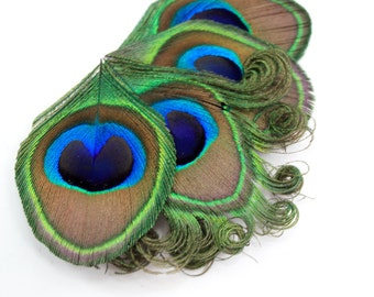 Simple - Peacock fascinator / Feather hair clip / Peacock hair accessory