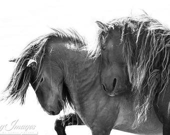 Two Sable Island Stallions IV - Fine Art Horse Photograph - Horse - Sable Island - Wild Horse - Black and White -Fine Art Print