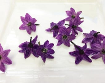 100 + Organic, PURPLE PEPPER BLOSSOMS, Edible Deep Purple Flowers, Salads, Garnishes Hors d'oeuvre Toppers